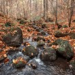 Autumn forest with creek — Stock Photo #34480425