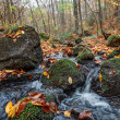 Autumn forest with creek — Stock Photo #34497875
