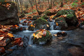 Autumn forest with creek — Stock Photo
