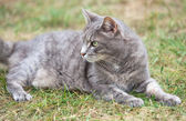 Gray kitten playing outdoors — Stock Photo