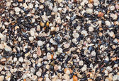 Seashells background — Stock Photo