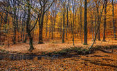 Podzimní les s creek — Stock fotografie