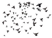 Many birds flying in the sky — Stock Photo