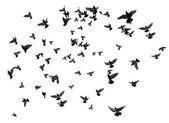 多くの鳥が空を飛んでいます。 — ストック写真
