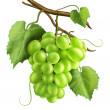 White grapes — Stock Photo