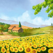 Stock Photo: Sunflowers field