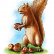 Постер, плакат: Hazelnuts and squirrel