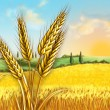 Постер, плакат: Wheat field
