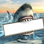 Shark advertising — Stock Photo