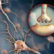 Neuron synapse — Stock Photo