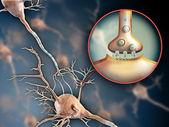 神经元突触 — 图库照片