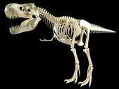 Tyrannosaurus T Rex skeleton — Stock Photo
