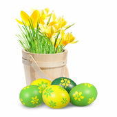 Colored Easter eggs and crocuses — Stock Photo