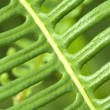 Macro shot of green leaf - Stock Photo