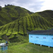 Tea plantation cameron highlands, malaysia — Stockfoto #12086440