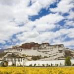 Potala palace — Stock Photo #12088782