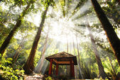 ライトの光と緑の森 — ストック写真
