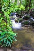 A photo of natural green waterfall — Stock Photo