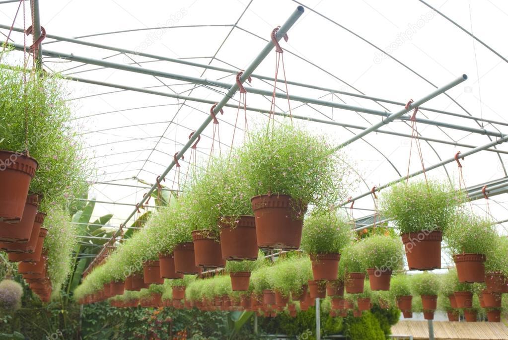 Emily Garden Nursery