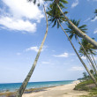 Blue beach with coconut tree - Stock Photo