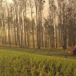 Foggy farmland in java — Stock Photo