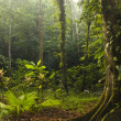 Natural tropical green forest - Stock Photo