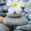 Stock Photo: Frangipani with with stack of rocks
