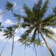 Beach with coconut trees - Stock Photo