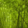 Stock Photo: Bamboo forest