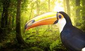 Toucan — Stock Photo