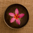 Frangipani spconcept photo, lowlight ambient splighting, sha — Stockfoto #14932027