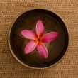 Stock Photo: Frangipani spconcept photo, lowlight ambient splighting, sha