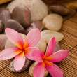 Tropical spa with frangipani flowers arrangement — Stock Photo #14932065
