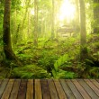 Rainforest with ray of lights and plank woods, suitable for prod — Stock Photo #27442895