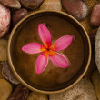 Frangipani spa concept photo, lowlight ambient spa lighting, sha — Stock Photo