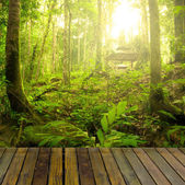 Rainforest with ray of lights and plank woods, suitable for prod — Stock Photo