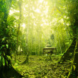 Tropical Rainforest in Malaysia during early morning with fogs — Stock Photo