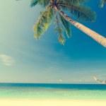 Coconut on a beach — Stock Photo #42272637