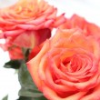 Red rose — Stock Photo #15696849