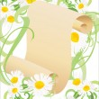 Daisy flowers, green grass and old paper scroll illustration vector isolated on white - Stock Vector