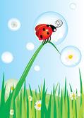 Coccinella su erba e daisy bolle — Vettoriale Stock
