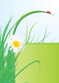Ladybird on grass and daisy — Stock Vector