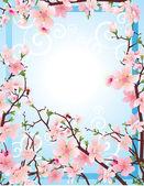 Sakura bloesem — Stockvector