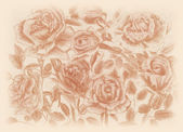 Sepia roses pensil draw floral vintage background — Stock Photo