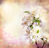Spring border background with pink blossom — Stock Photo