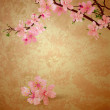 Spring blossom cherry tree and pink flowers on brown old paper g — Stock Photo #8406616