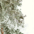 Frozen pine — Stock Photo