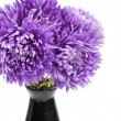 Bunch of asters — Stock Photo