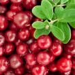 Organic cowberry — Stock Photo #32759227