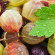 Organic gooseberry — Stock Photo #34680709